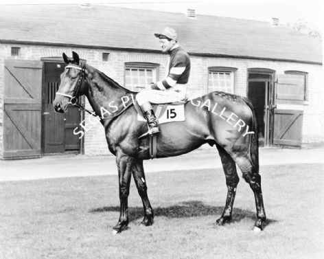 Racehorse Kilmore with Jockey Fred Winter